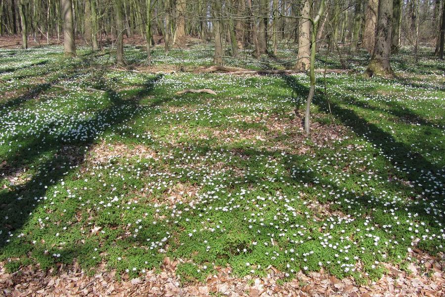 Ontdek de natuur in het Bergerbos