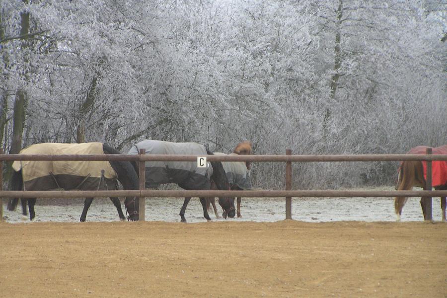 De paarden van De Waanhoeve en de rijbak