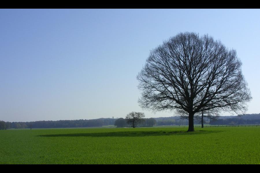Bergerbos - Achterhoek - Montferland landschap