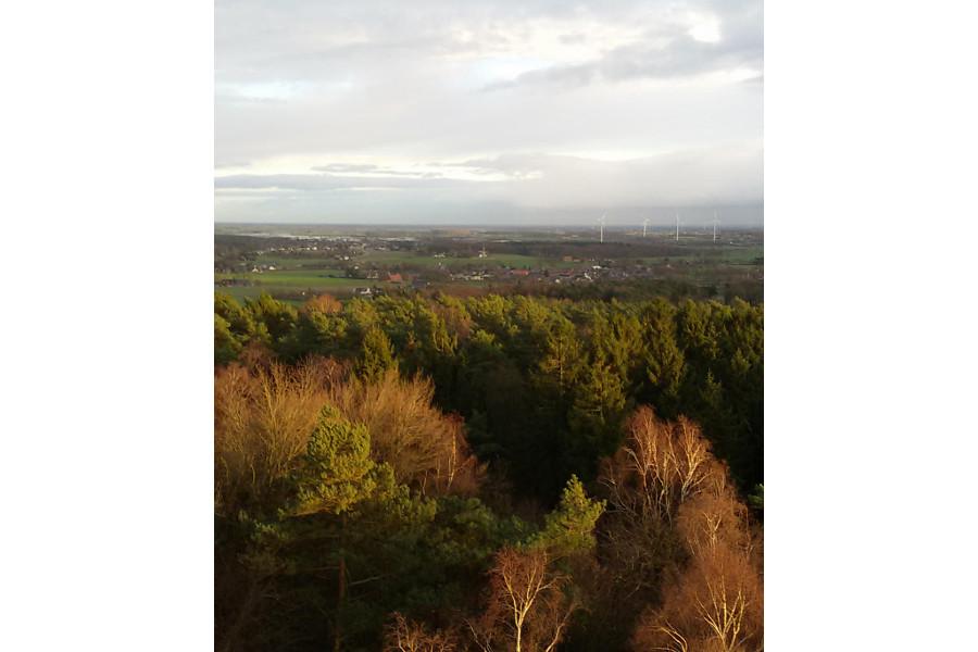 Uitzicht op het Bergherbos vanaf de uitkijktoren te Stokkum