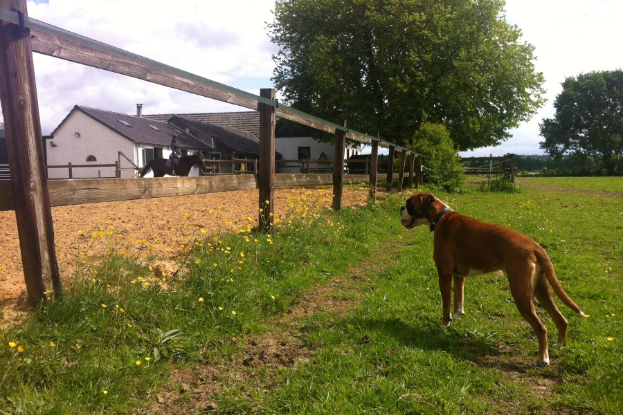 Vakantie Achterhoek met hond