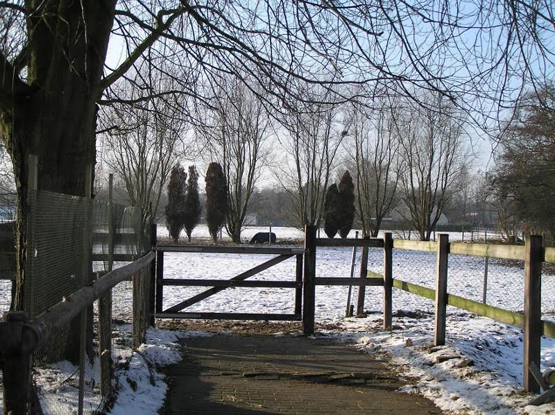 De wei met paarden in de winter