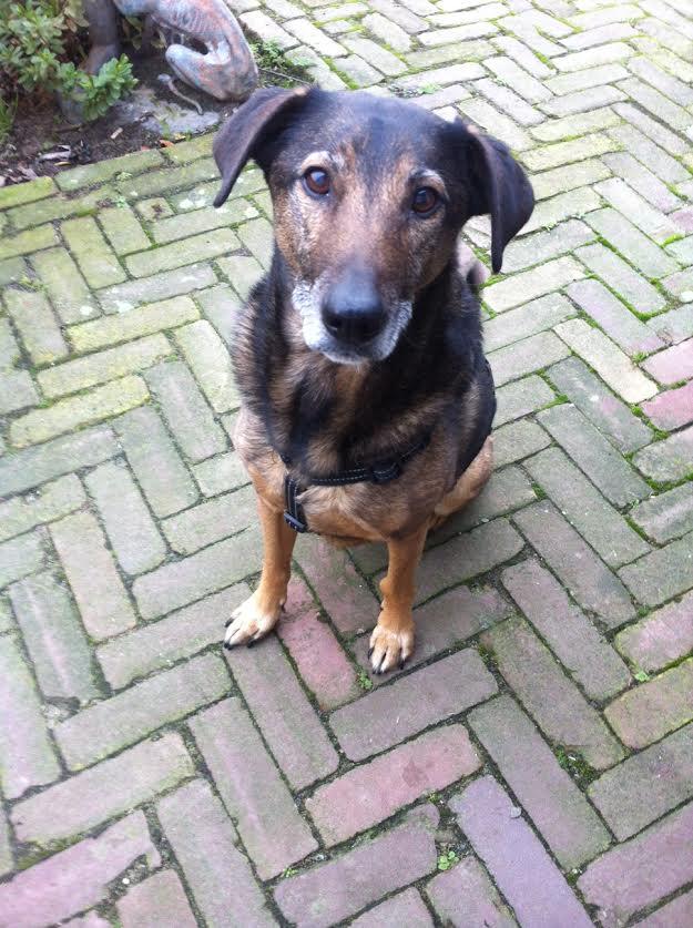 Hond Max op bezoek op de Waanhoeve