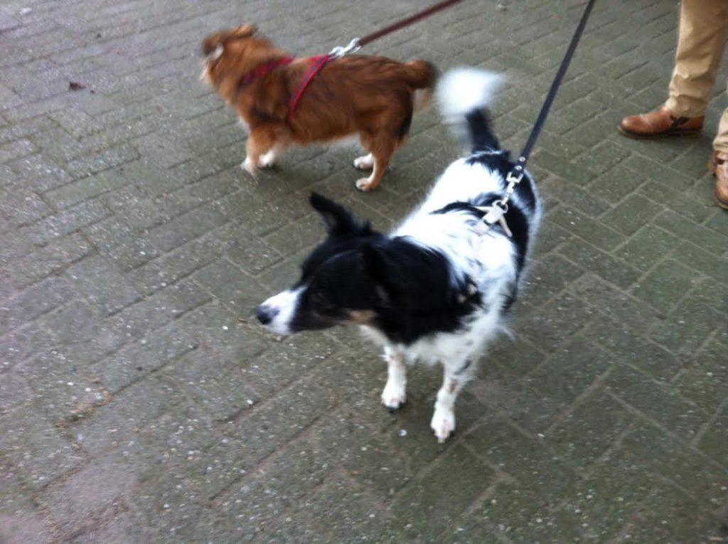 De honden Stanley en Lisa uit verre landen