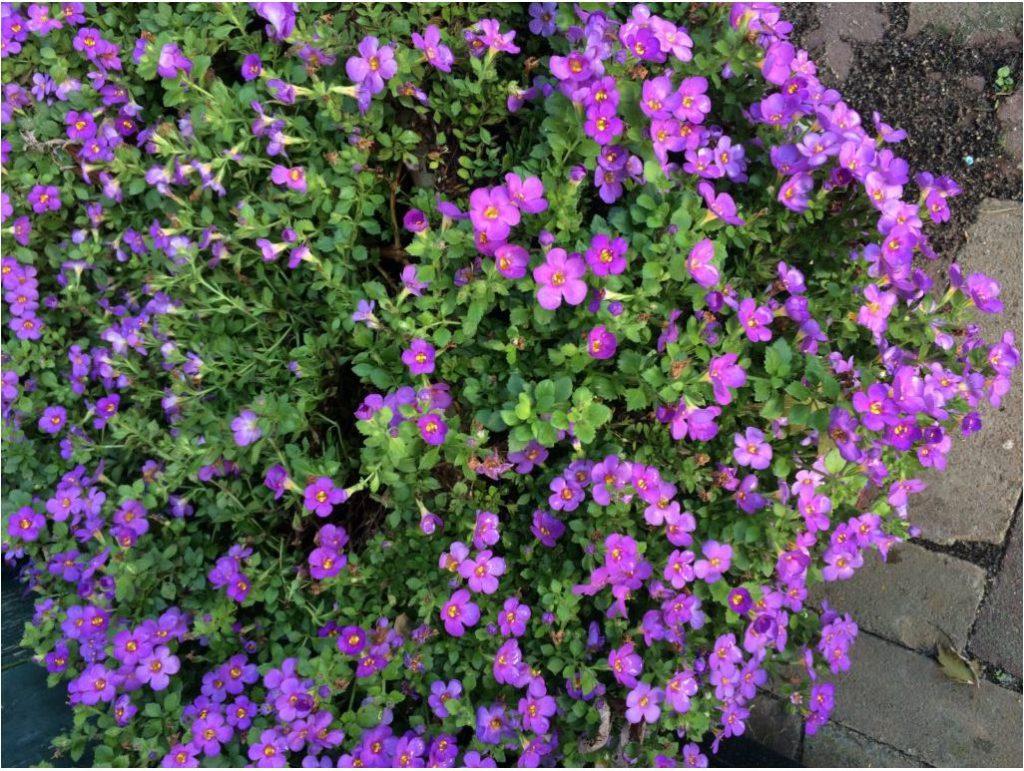 Bloemen in november op de Waanhoeve